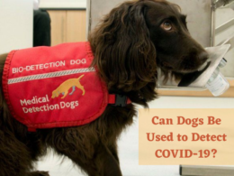 Can Dogs Be Used to Detect COVID-19?