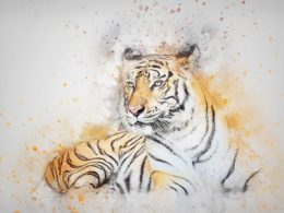 The Rise of The Bengal Tiger!